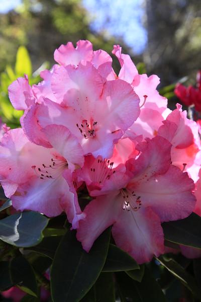 Mendocino Botanical Gardens June 2015