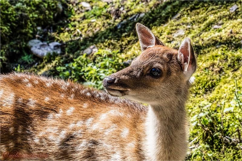 2016-09-07 Tierpark Goldau - 0U5A8739-Bearbeitet.jpg
