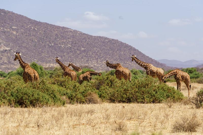 Kenya 2015-00886.jpg