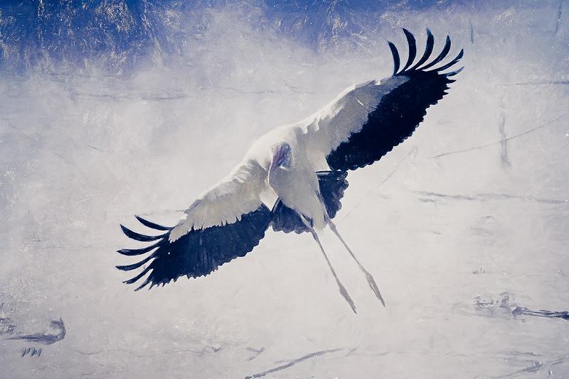 snowstork_DSC3800 copy-web1068x1600U100.jpg
