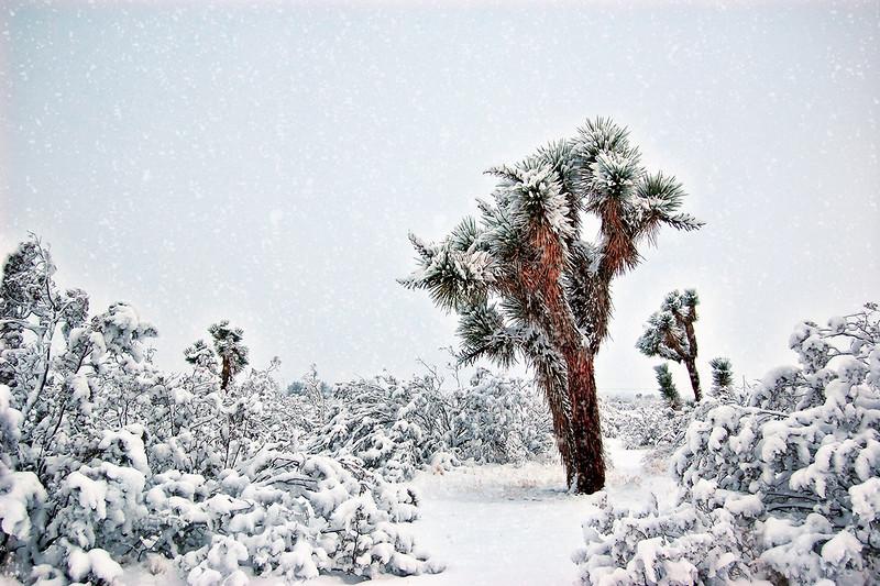 Rare Mojave Snow