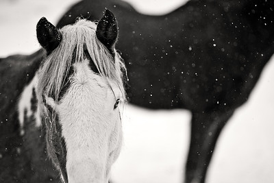 Horses I Have Known