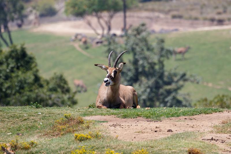 2016.06.01 Safari Park 0075.jpg
