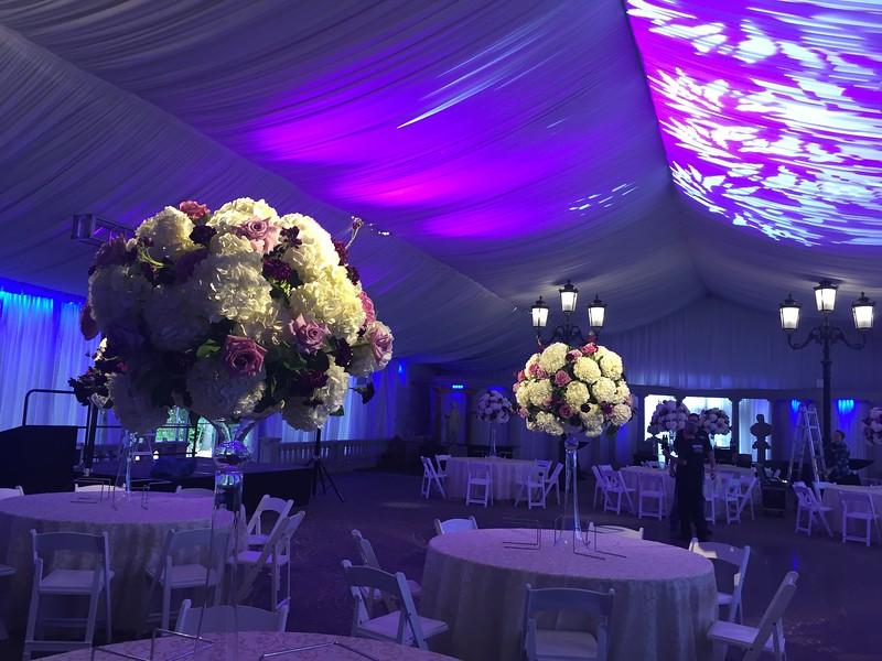 purple room.jpg
