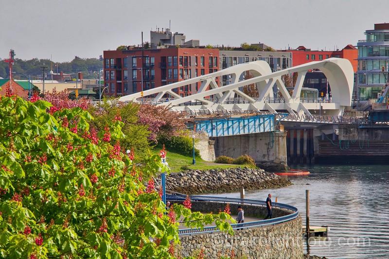 The Johnson Street Bridge
