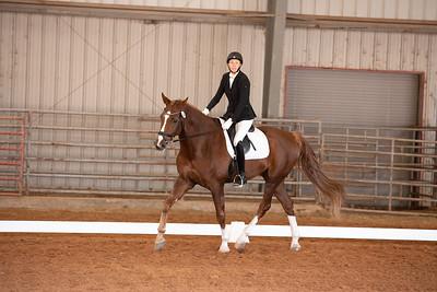 Horse 146