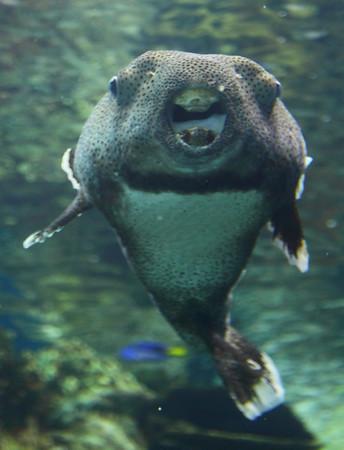 Aquarium Shots