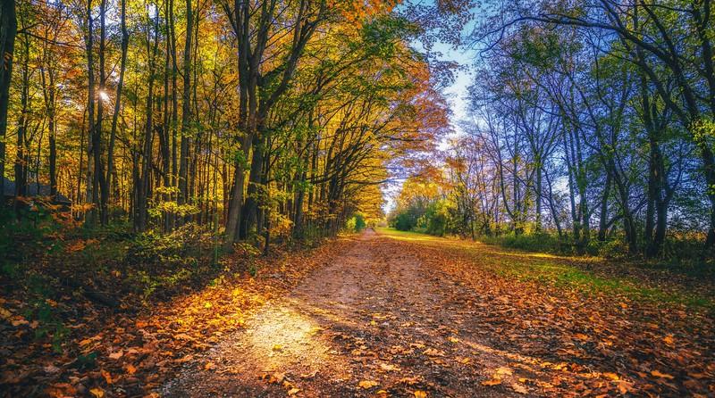 fall (1 of 1)-5.jpg