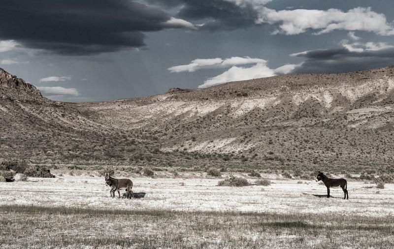 Burrows-Nevada-April2017.jpg