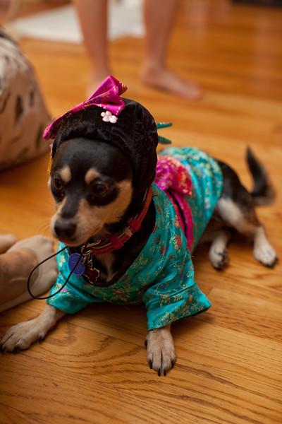 Dog-sushi-halloween2-13.jpg