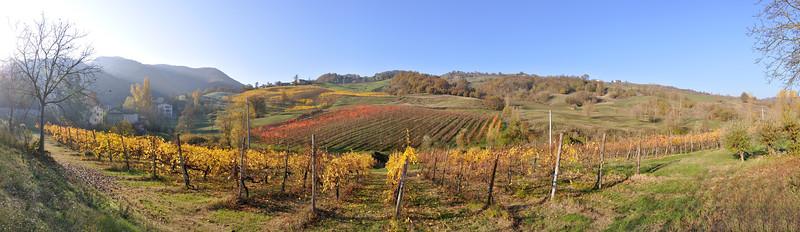 Vineyards - Bettola, Vezzano sul Crostolo, Reggio Emilia, Italy - November 13, 2011