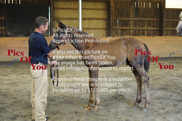 Foal entry 5