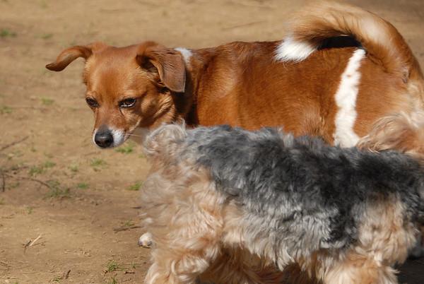 2012-03-18 Morris County Central Park Dog Park