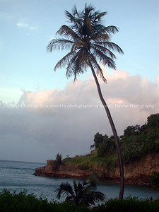 016-palm_tree-grenada-06dec02-1954