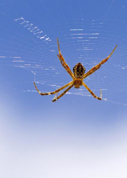 Signature-Spider-01.jpg