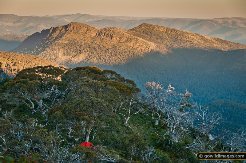 Macpac Olympus tent on Mt Speculation, with a sunset view over The Viking and Wonnangatta Wilderness