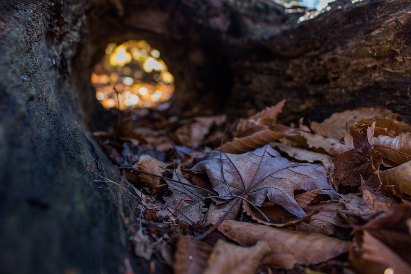 Chestnut_Ridge-5.jpg