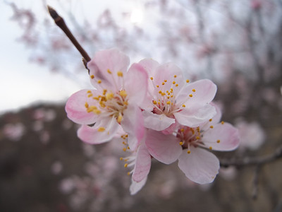 Llingshui village to jieshi village【April】