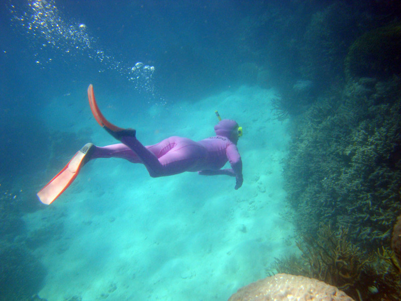 Snorkeller diving.JPG