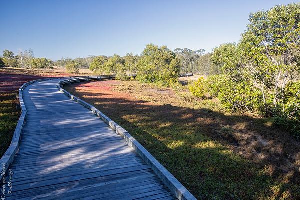 Boondal Wetlands - Brisbane, Queensland, Australia