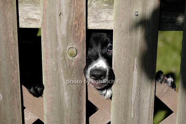 Southampton Animal Shelter 7-14-20, photos by Rob Rich/SocietyAllure.com ©2020 robrich101@gmail.com 516-676-3939al Shelter 7-14-20.