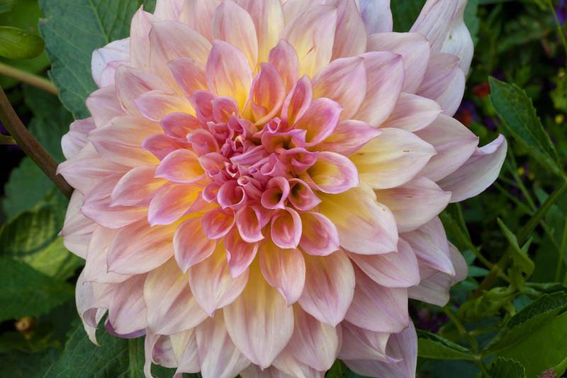 Botanicgarden11 249.jpg