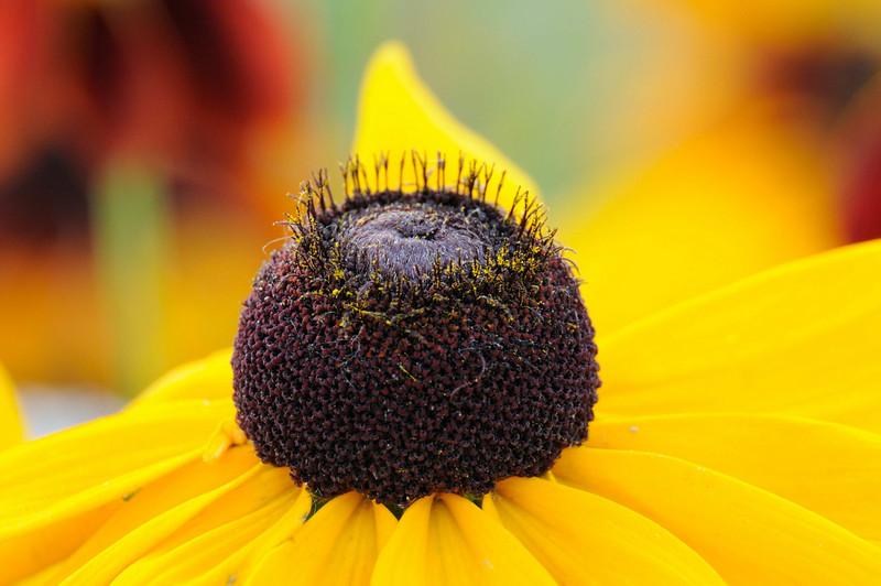 flowers_20080714-010.jpg