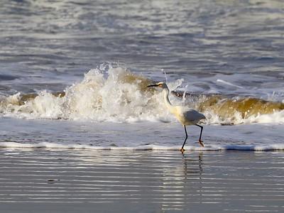 Winged California Coast