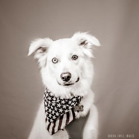 Wimberley Vet Clinic Pet Portraits