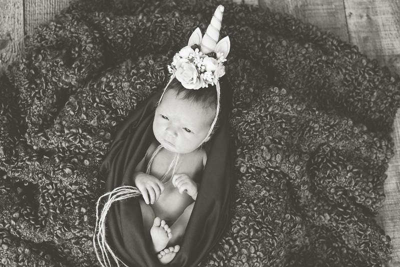 Baby Breyer