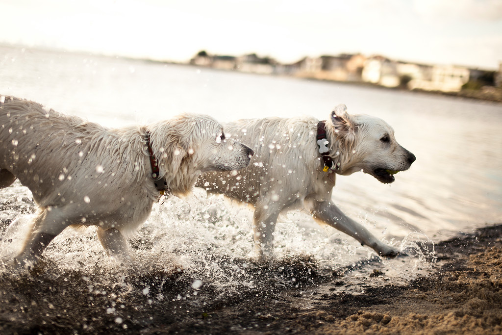 Dogsonbeach-AlexanderGardner-0010-20100614