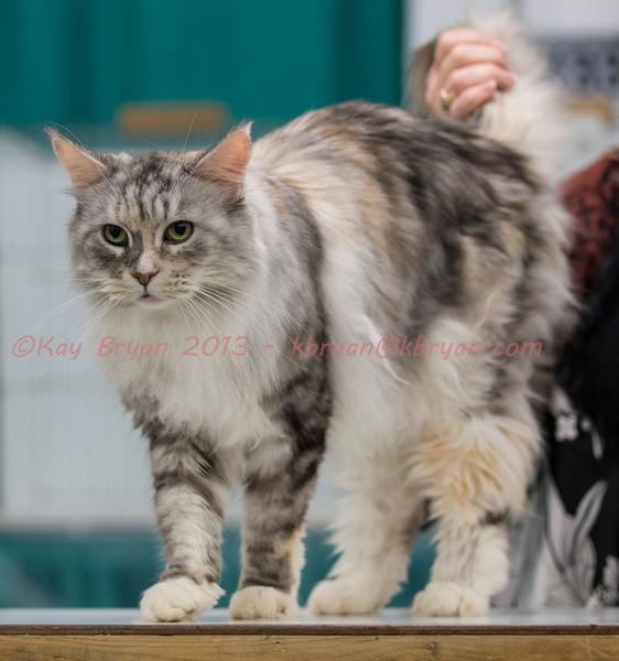 CatShow2014030_1.jpg