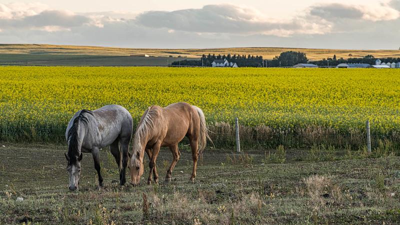 barley 35.jpg