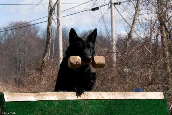 Quinebaug Schutzhund Club