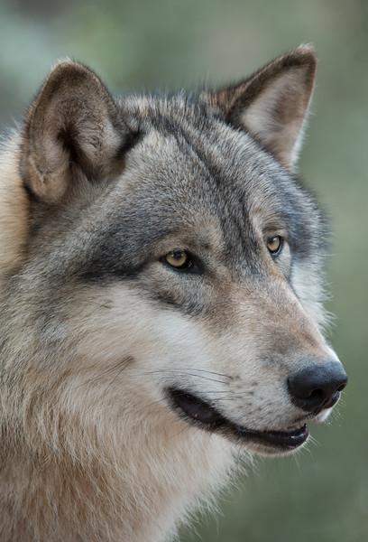 Seacrest Wolves_-29.jpg