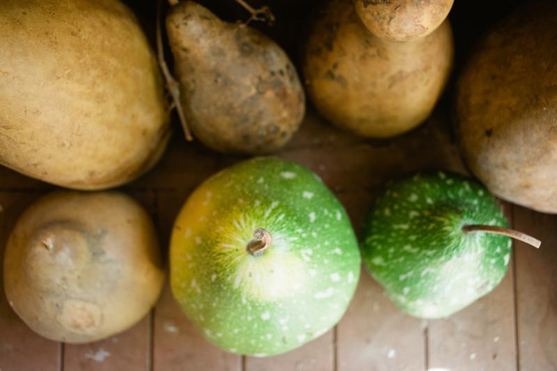 spelman_gourds-12.JPG