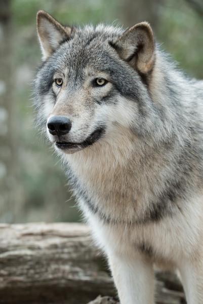 Seacrest Wolves_-2.jpg