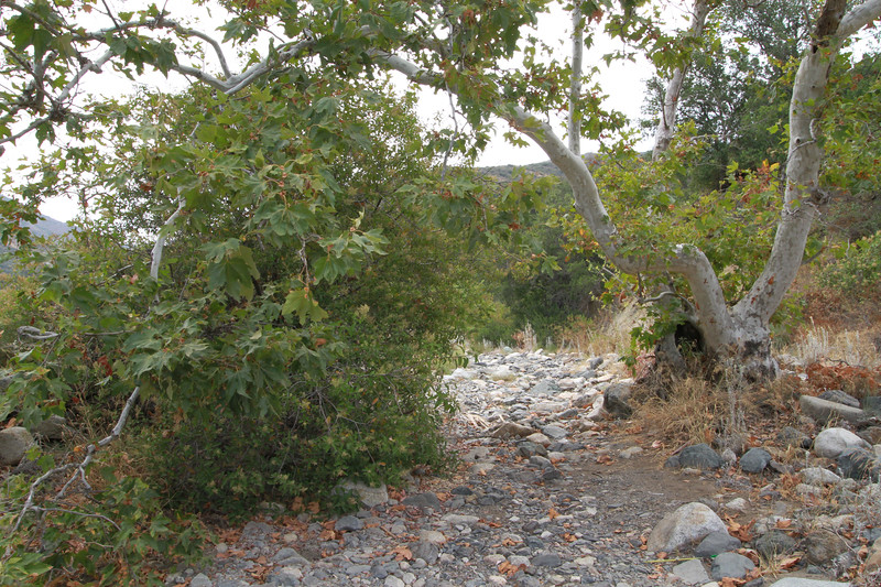 32633-Trabuco-Canyon-Rd-Mitchell-East-Trabuco-Canyon_63.JPG