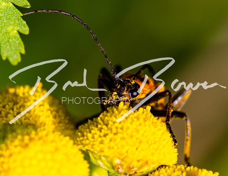beetle-1.jpg
