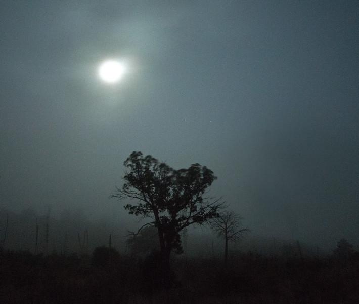 TreeintheFog1.jpg