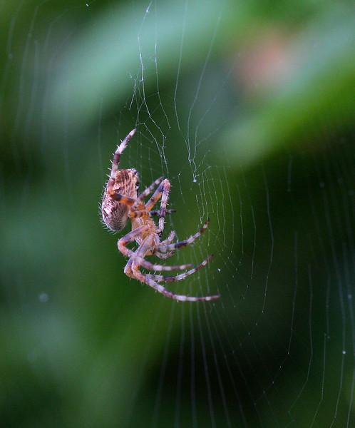 5909 Spider.jpg