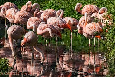 Flamingos: 2019
