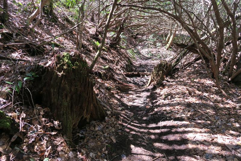 Little Green Creek Trail - 3,620'