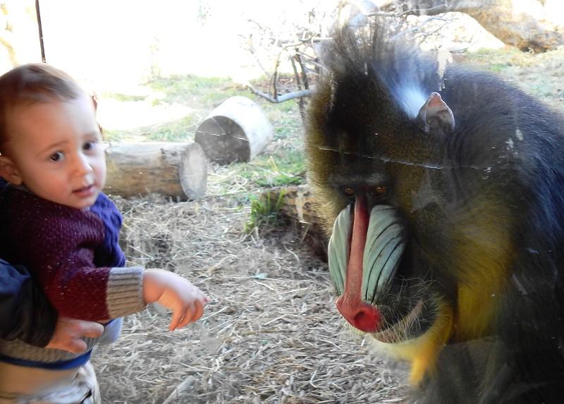 Denver Zoo 2018 (2622).JPG
