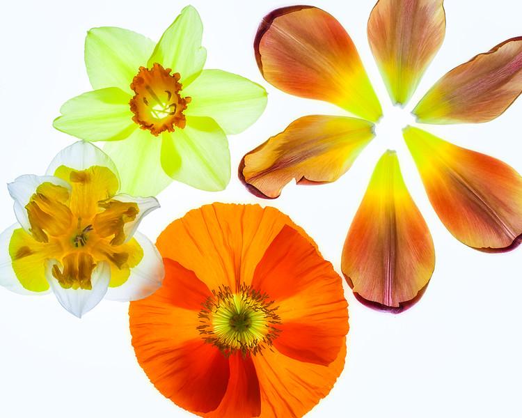 spring-bouquet-02.jpg