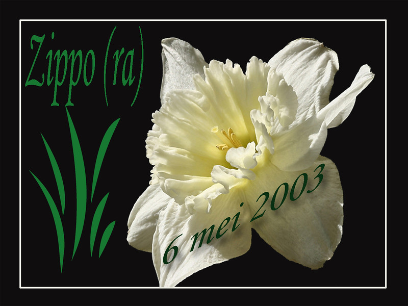 Zippo 0 Tittel white daff.jpg