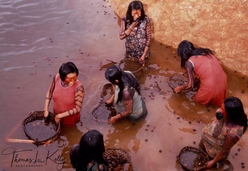 Kayapo women washing the Brazalian nuts which is used to make medicinal oil.Kayapo, Brazilian Amazon.