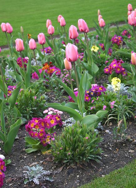 tulips- Jardin Du Luxembourg