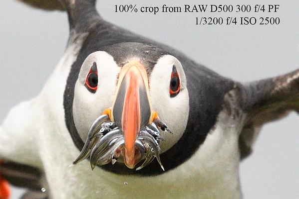 100% Crops