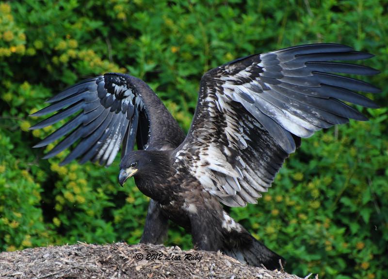 DSC_0966_WingsOut.JPG